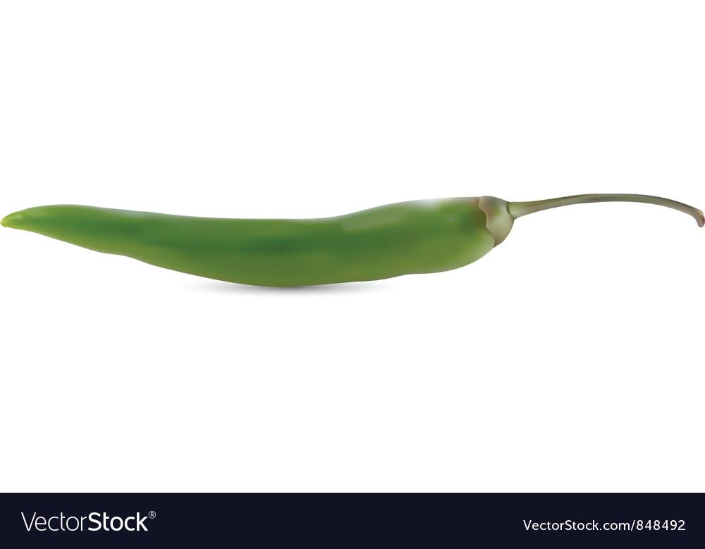 Hot chili pepper vector | Price: 1 Credit (USD $1)