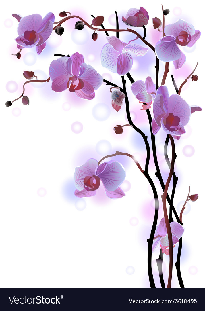 Vertical background with violet orchids vector   Price: 1 Credit (USD $1)
