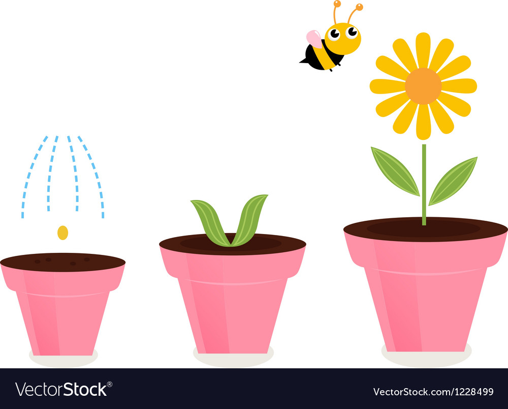 Flower in pots growth stages isolated on white vector | Price: 1 Credit (USD $1)