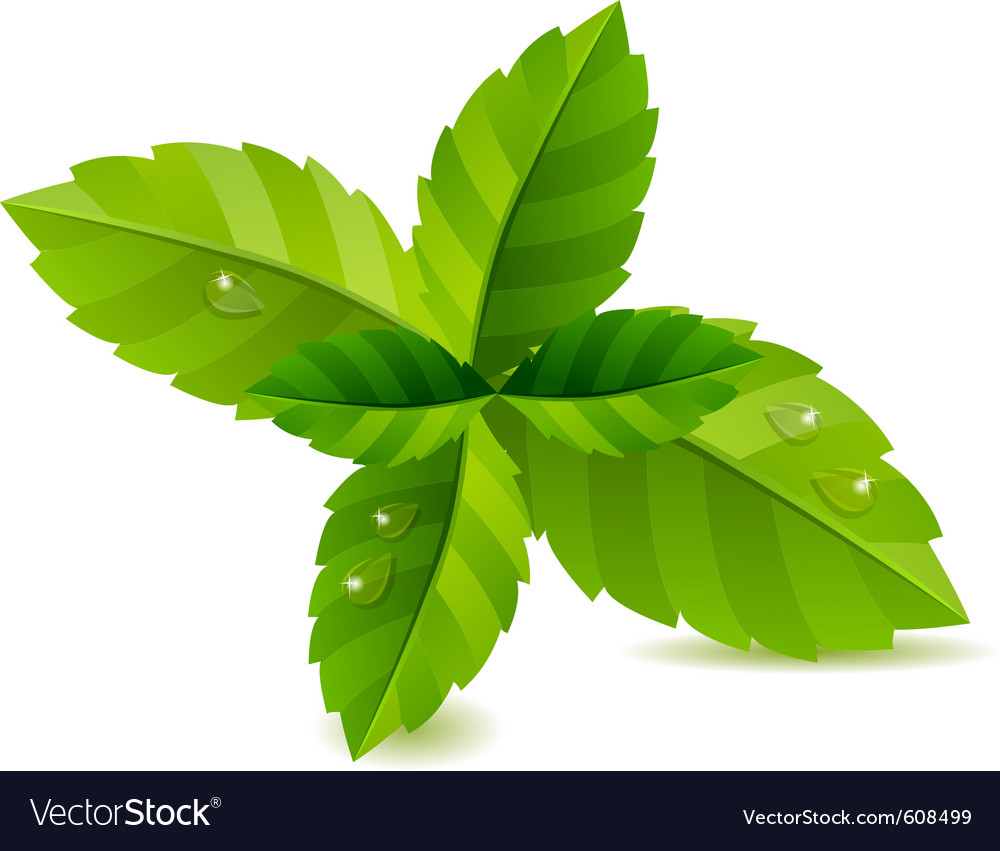 Fresh green mint leaves isolated vector | Price: 1 Credit (USD $1)