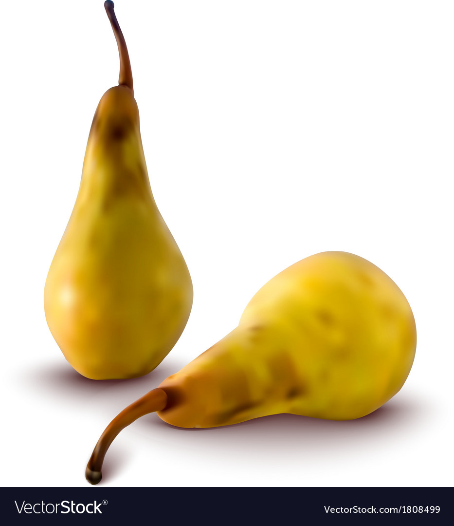 Pears vector | Price: 1 Credit (USD $1)