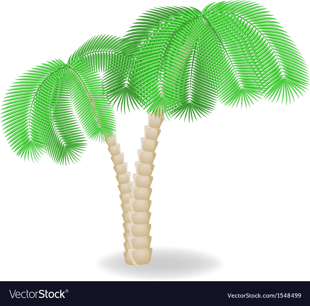 Two bend palm trees vector | Price: 1 Credit (USD $1)