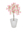 Beautiful pink flowering plants in flower pot vector