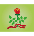 Red rose with ribbon vector