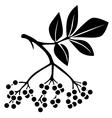 Elderberry vector