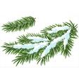 Fur-tree branch under snow vector