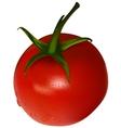 One cherry tomato vector
