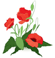 Red poppies vector