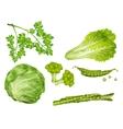 Green vegetables set vector