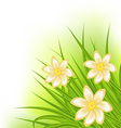 Green grass with flowers spring background vector
