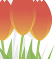 Three bright festive tulips on a white background vector