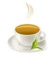 Cup of hot green tea vector