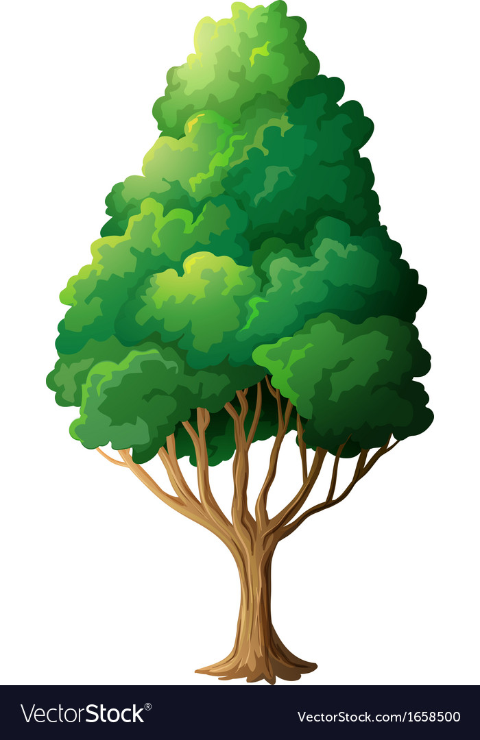 A tall old tree vector | Price: 1 Credit (USD $1)