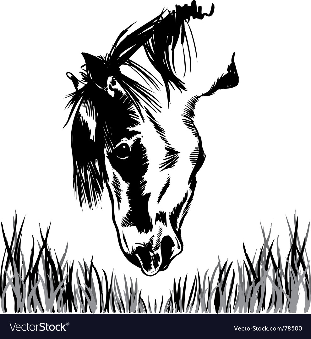 Horse feeding on grass illustration vector | Price: 1 Credit (USD $1)
