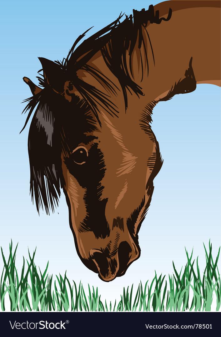 Horse feeding on grass illustration vector | Price: 3 Credit (USD $3)