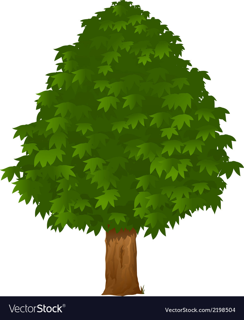 Chestnut tree vector | Price: 1 Credit (USD $1)
