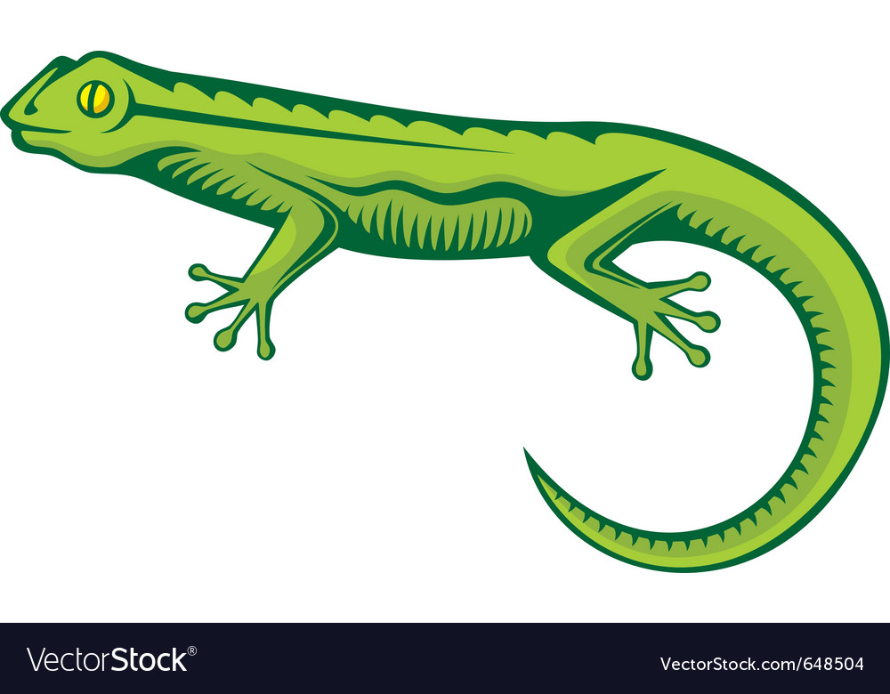 Green lizard vector | Price: 1 Credit (USD $1)
