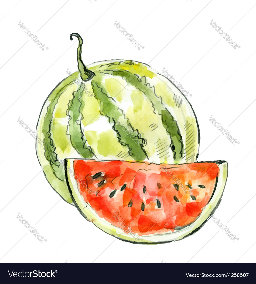 Picture of watermelon vector | Price: 1 Credit (USD $1)