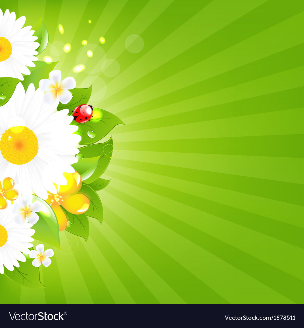 Bunch of flowers with grass and sunburst vector | Price: 1 Credit (USD $1)