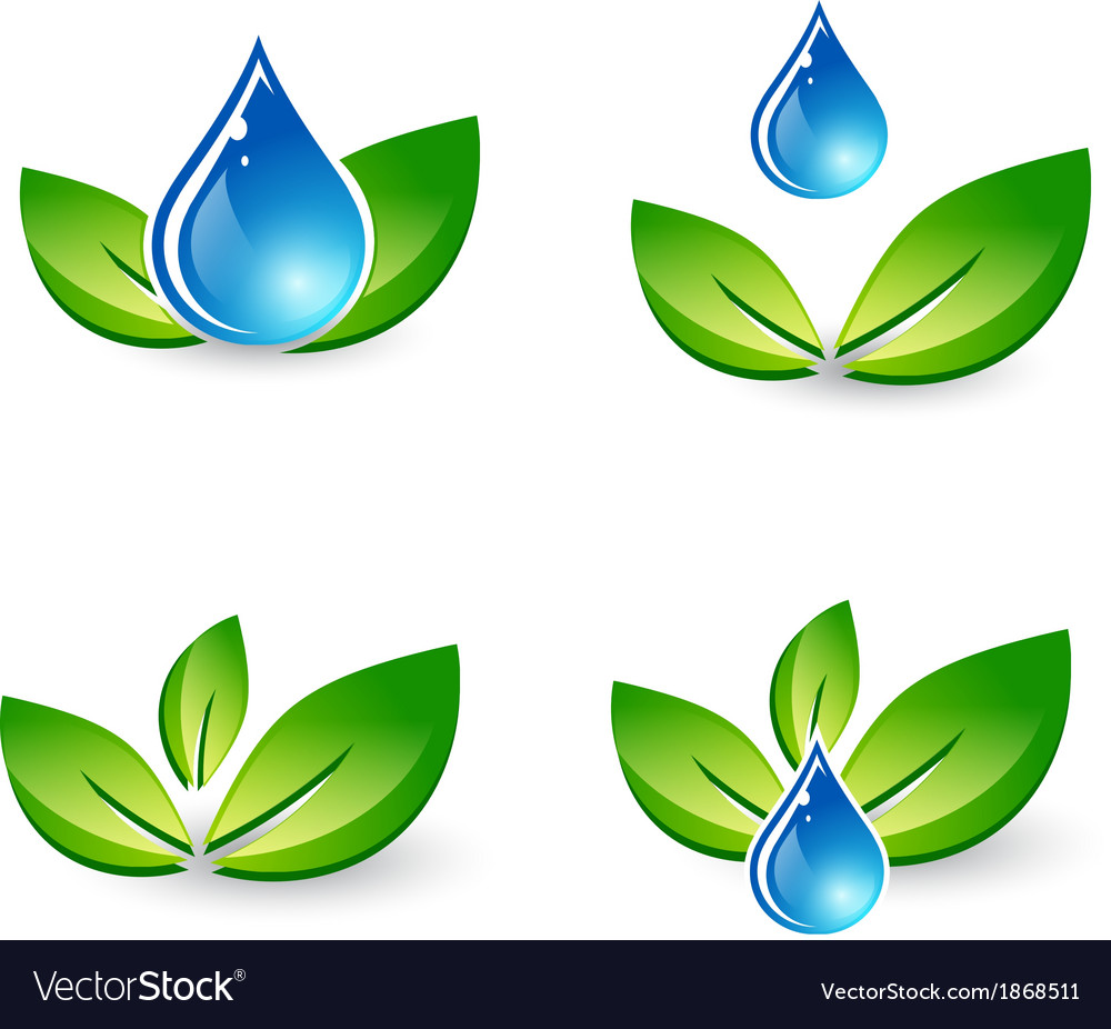 Green leaf and water drop vector | Price: 1 Credit (USD $1)