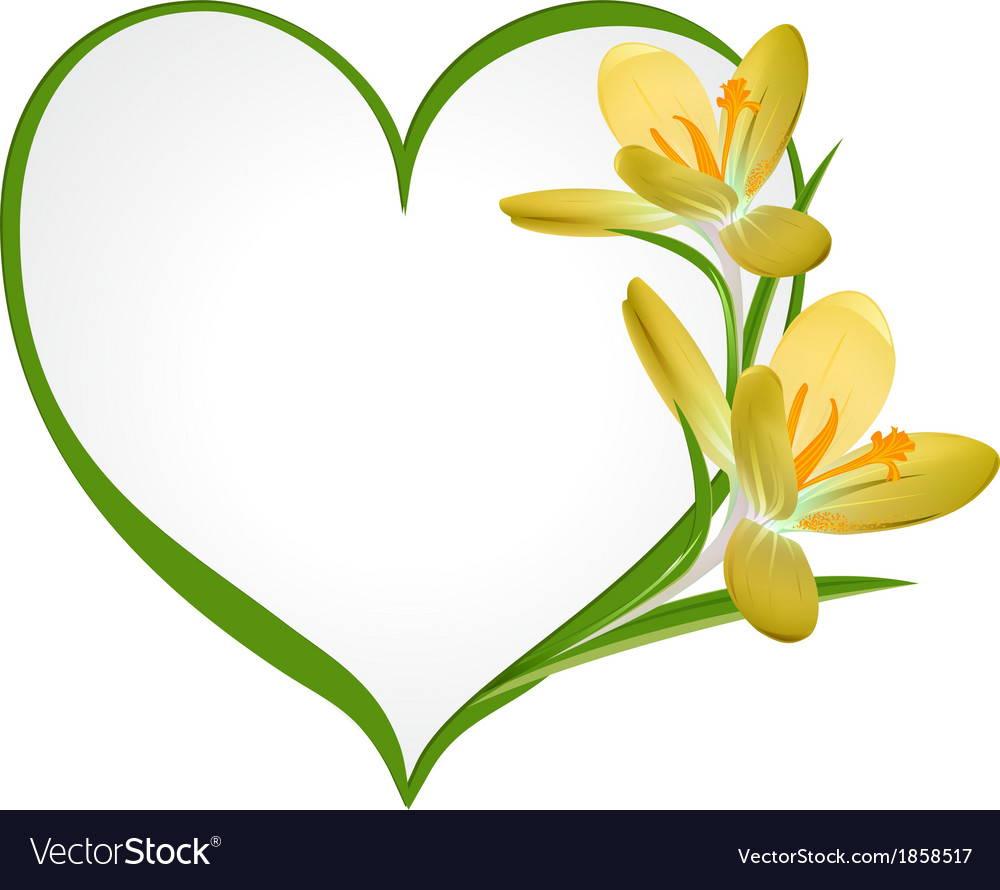 Yellow crocus with a frame in the shape of heart vector | Price: 1 Credit (USD $1)