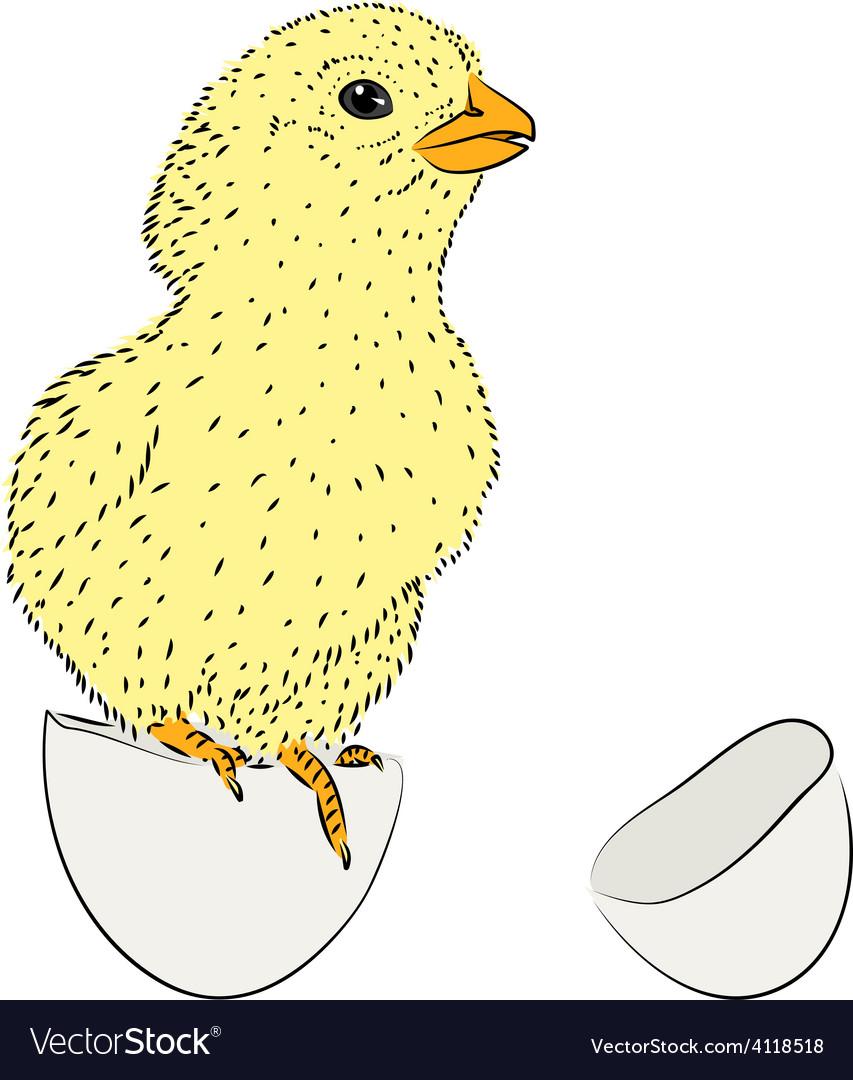 Newborn chicken vector | Price: 1 Credit (USD $1)