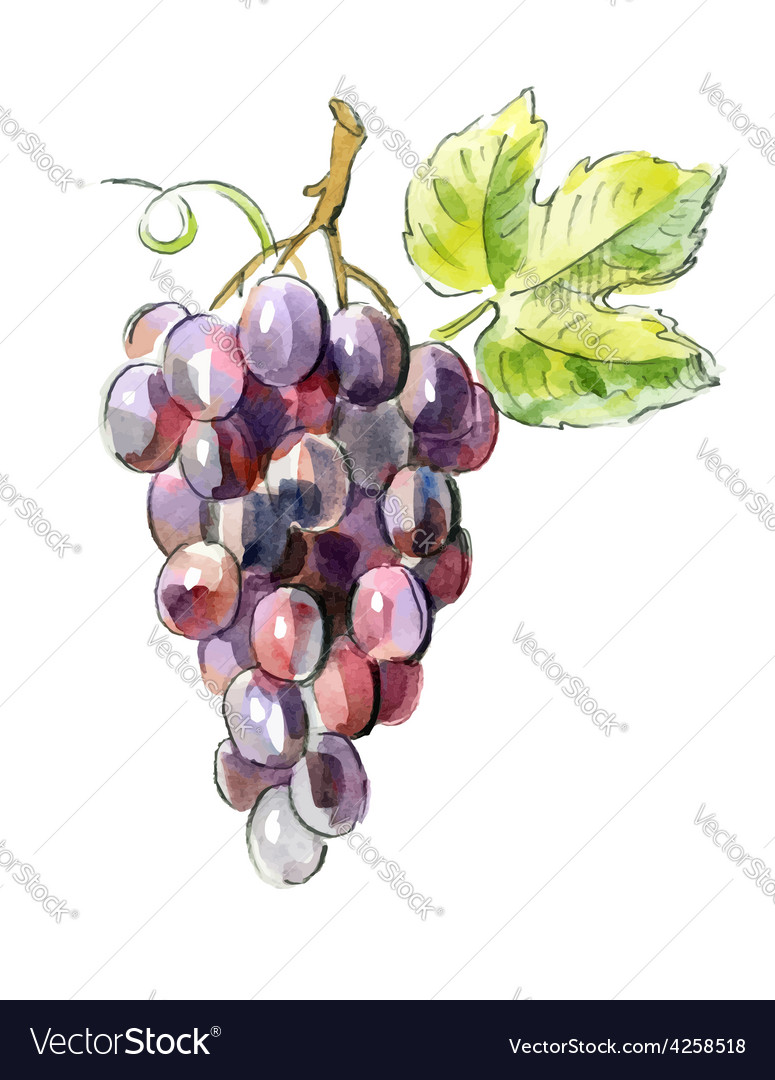 Picture of red grapes vector | Price: 1 Credit (USD $1)