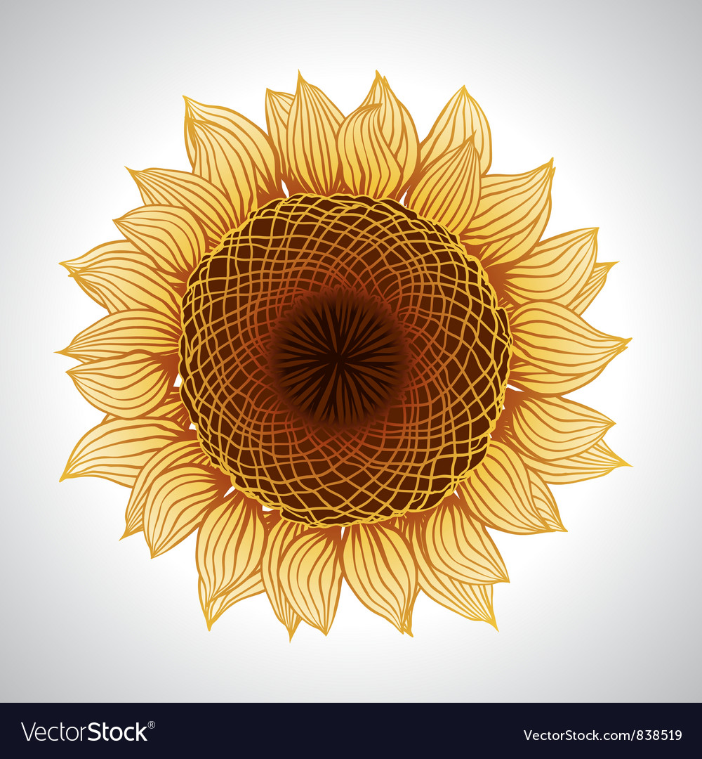 Sunflower flower element for design vector | Price: 1 Credit (USD $1)