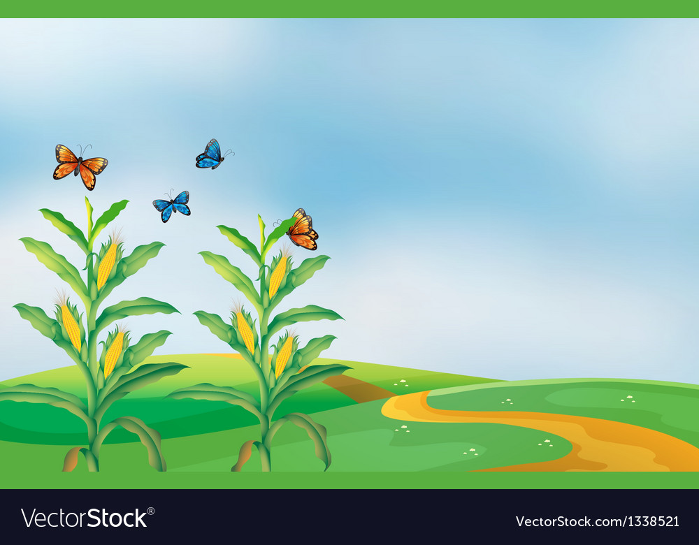 A corn field at the hill with butterflies vector | Price: 1 Credit (USD $1)
