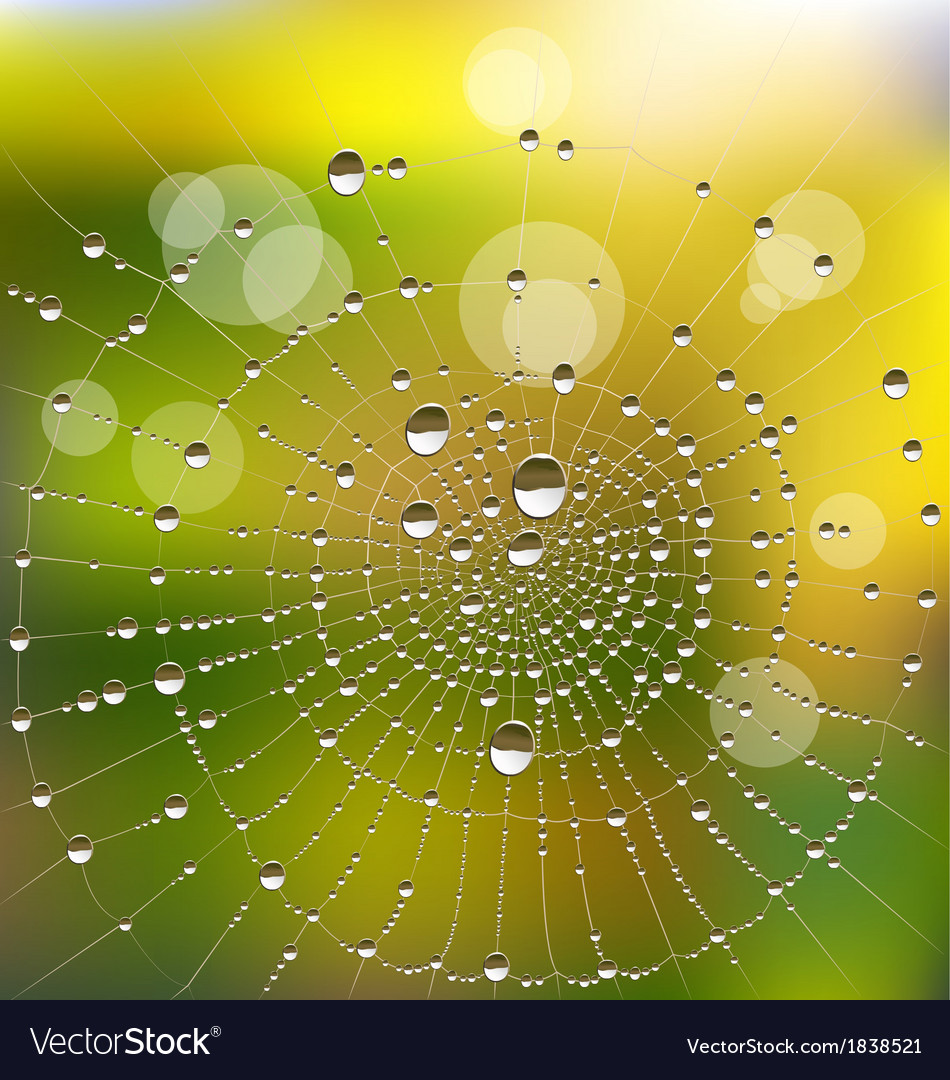 Water drops on a spider web vector   Price: 1 Credit (USD $1)
