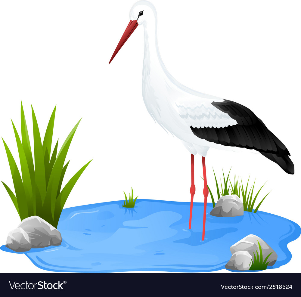 Small pond with white stork vector | Price: 1 Credit (USD $1)
