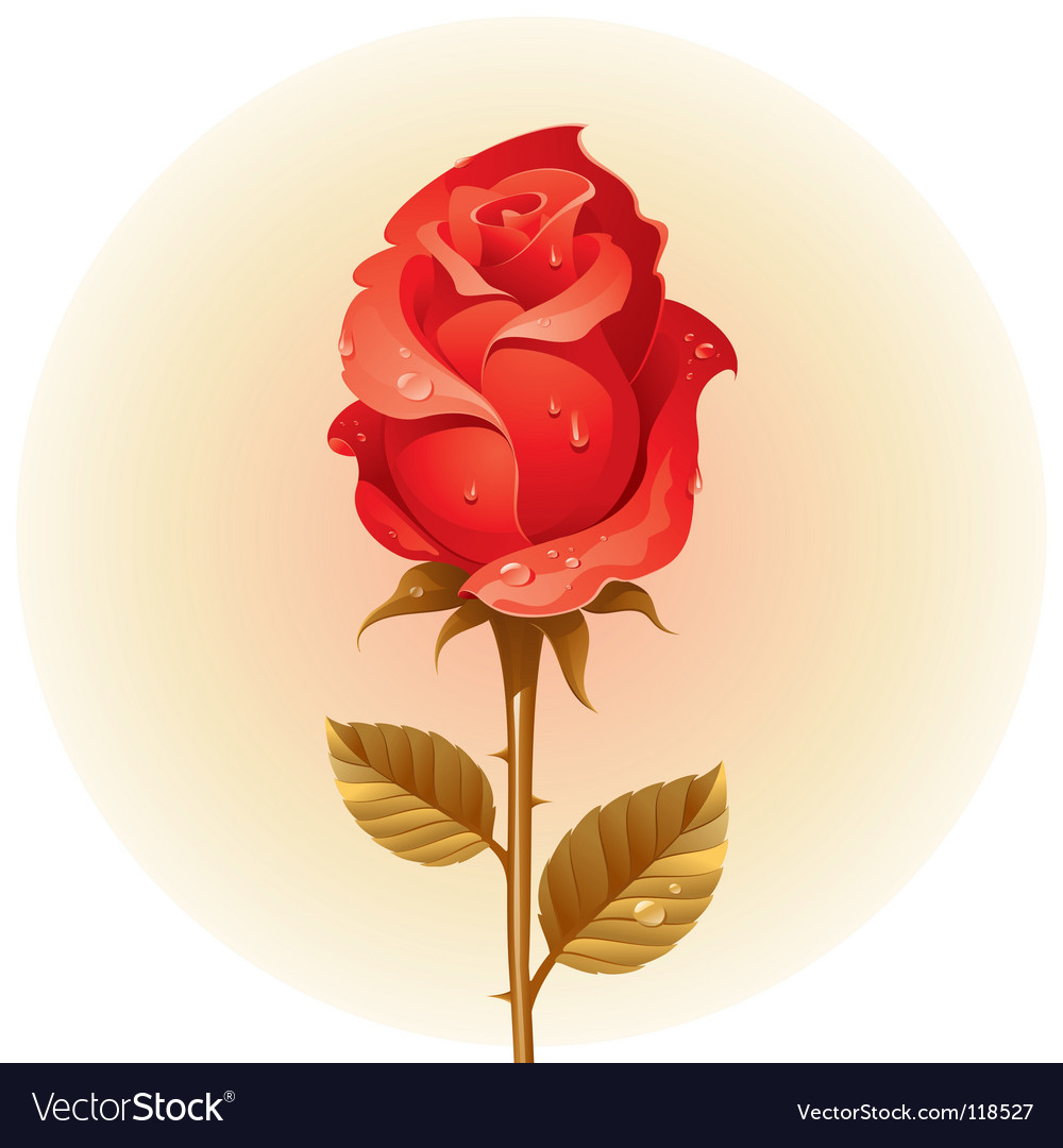Red rose with dew vector | Price: 1 Credit (USD $1)
