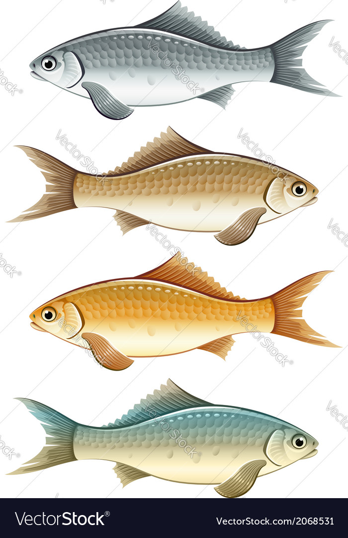 Set of live colour fish vector | Price: 1 Credit (USD $1)