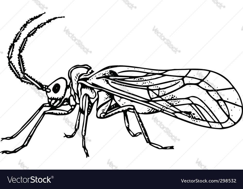 Bug copeognatha vector   Price: 1 Credit (USD $1)