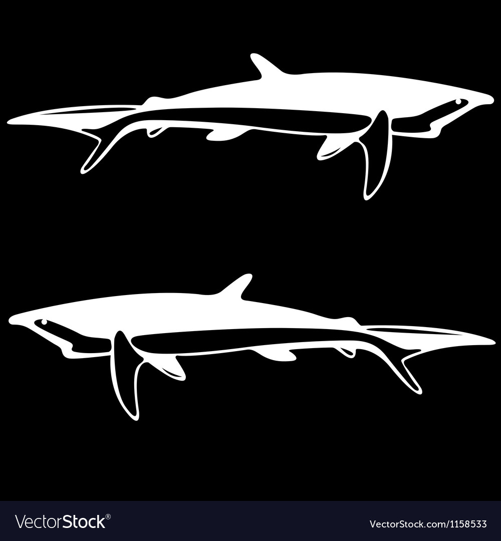 Shark black and white outline vector | Price: 1 Credit (USD $1)