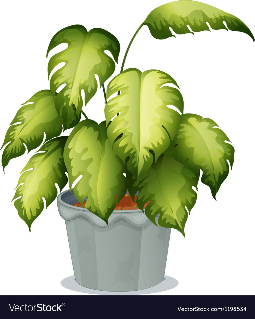 An ornamental plant in a pot vector   Price: 1 Credit (USD $1)