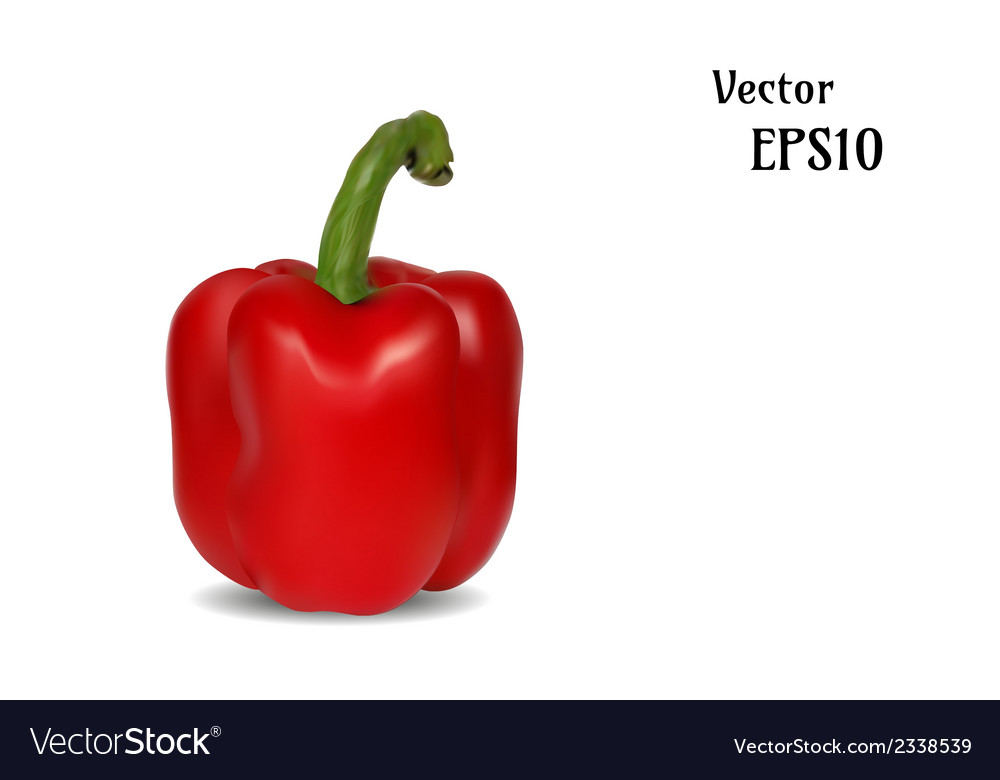 Realistic capsicum vector | Price: 1 Credit (USD $1)