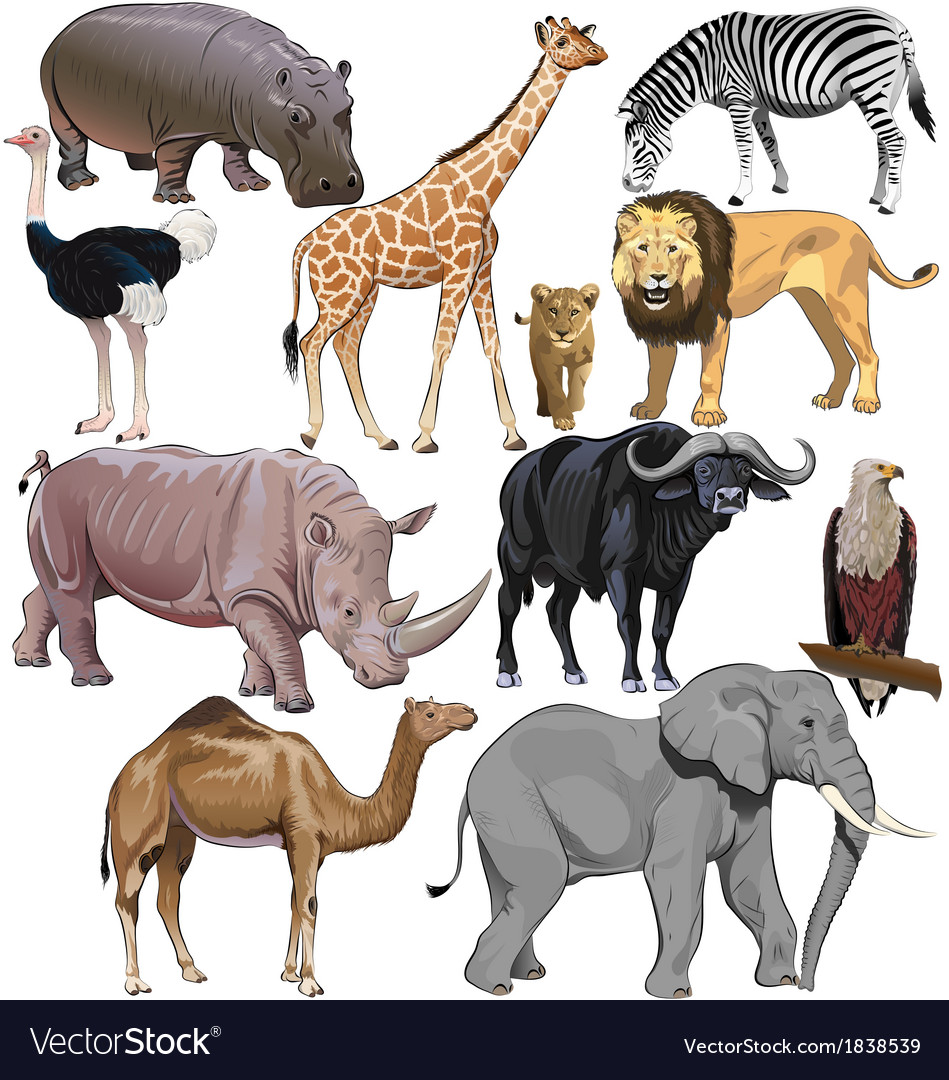 Wild animals from african continent vector | Price: 5 Credit (USD $5)