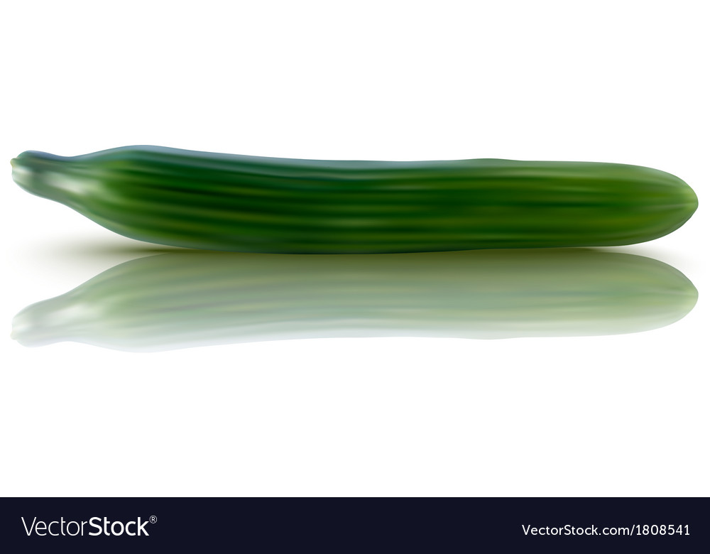 Fresh cucumber vector | Price: 1 Credit (USD $1)