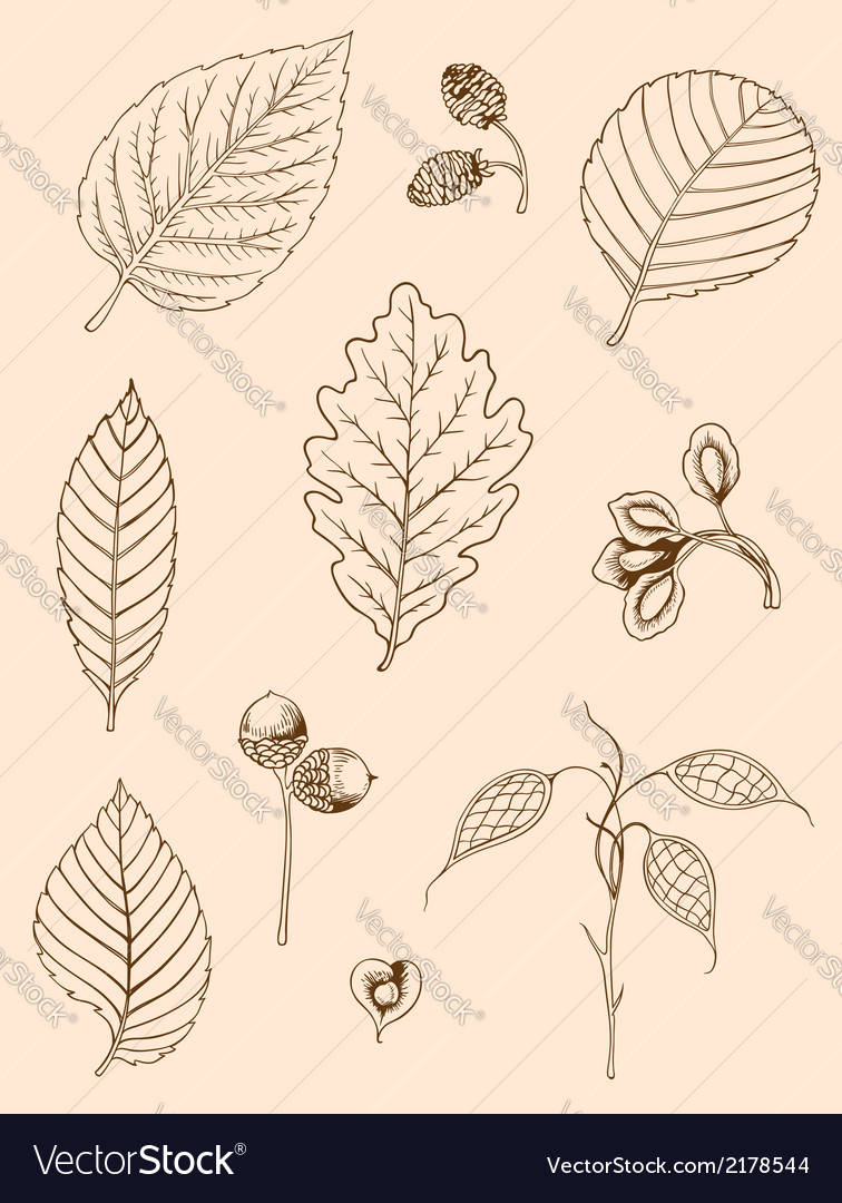 Hand drawn autumn leaves vector | Price: 1 Credit (USD $1)