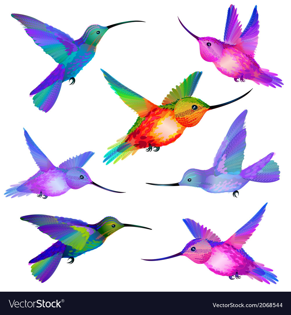 Set of isolated humming birds vector | Price: 1 Credit (USD $1)