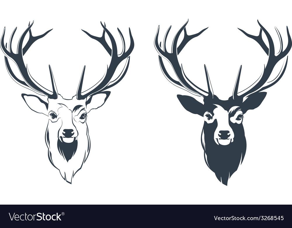 Male red deer head vector