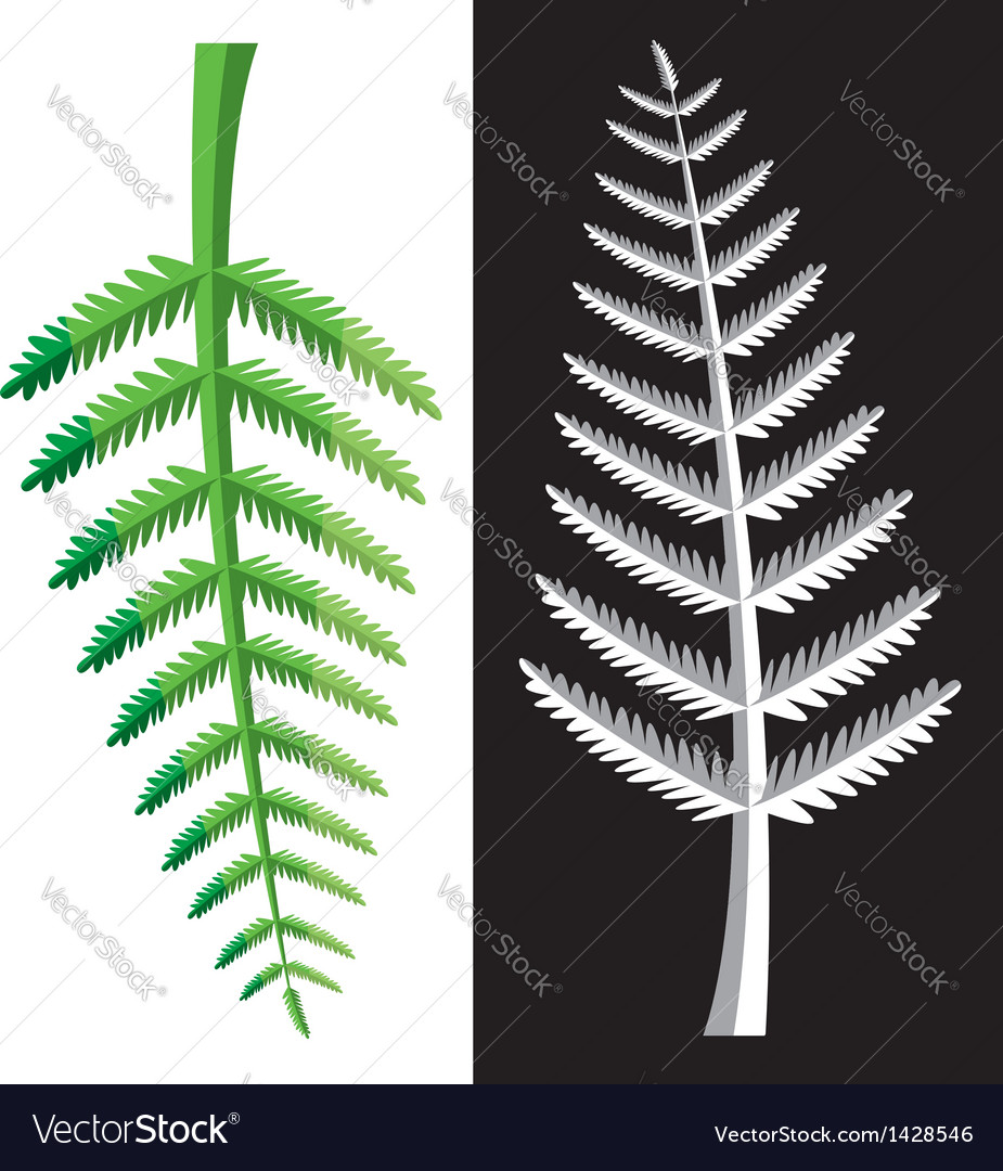 Fern leaves vector | Price: 1 Credit (USD $1)