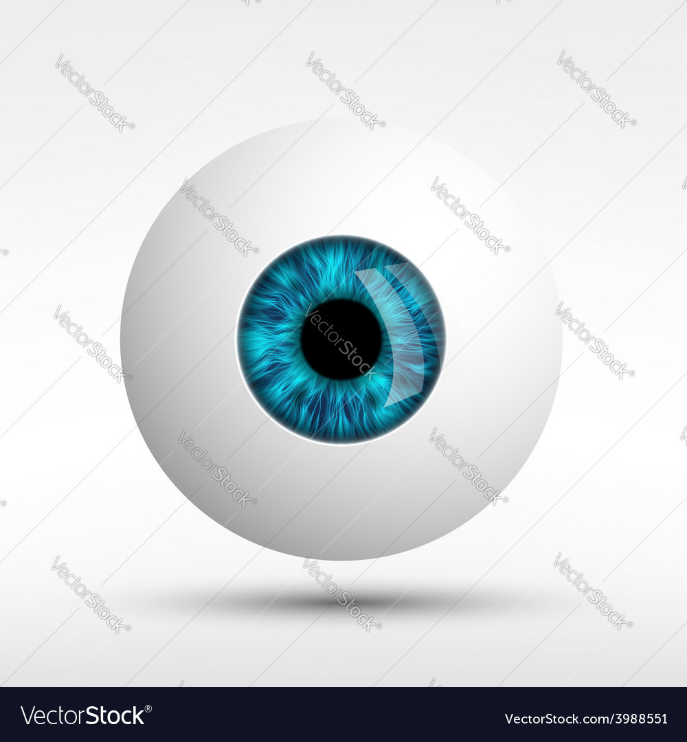 Human eye isolated on white background vector