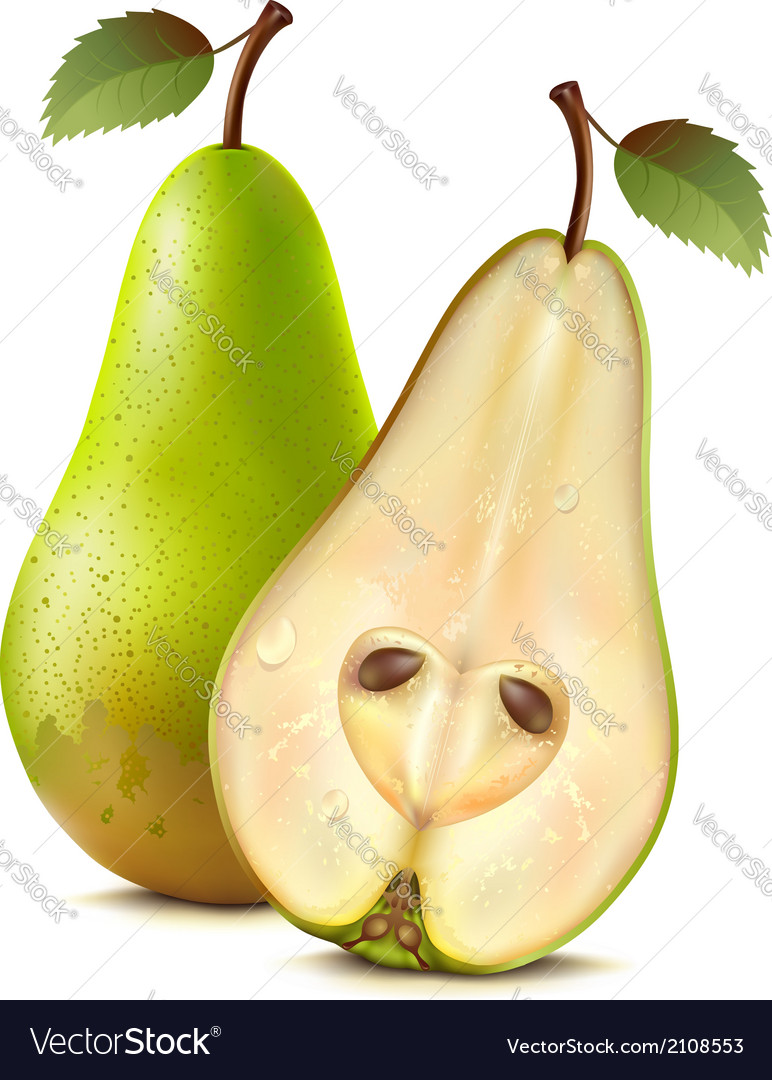 Two pears vector | Price: 1 Credit (USD $1)
