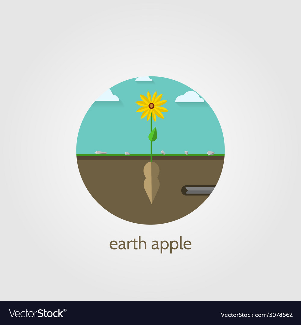 Flat icon for jerusalem artichoke vector | Price: 1 Credit (USD $1)
