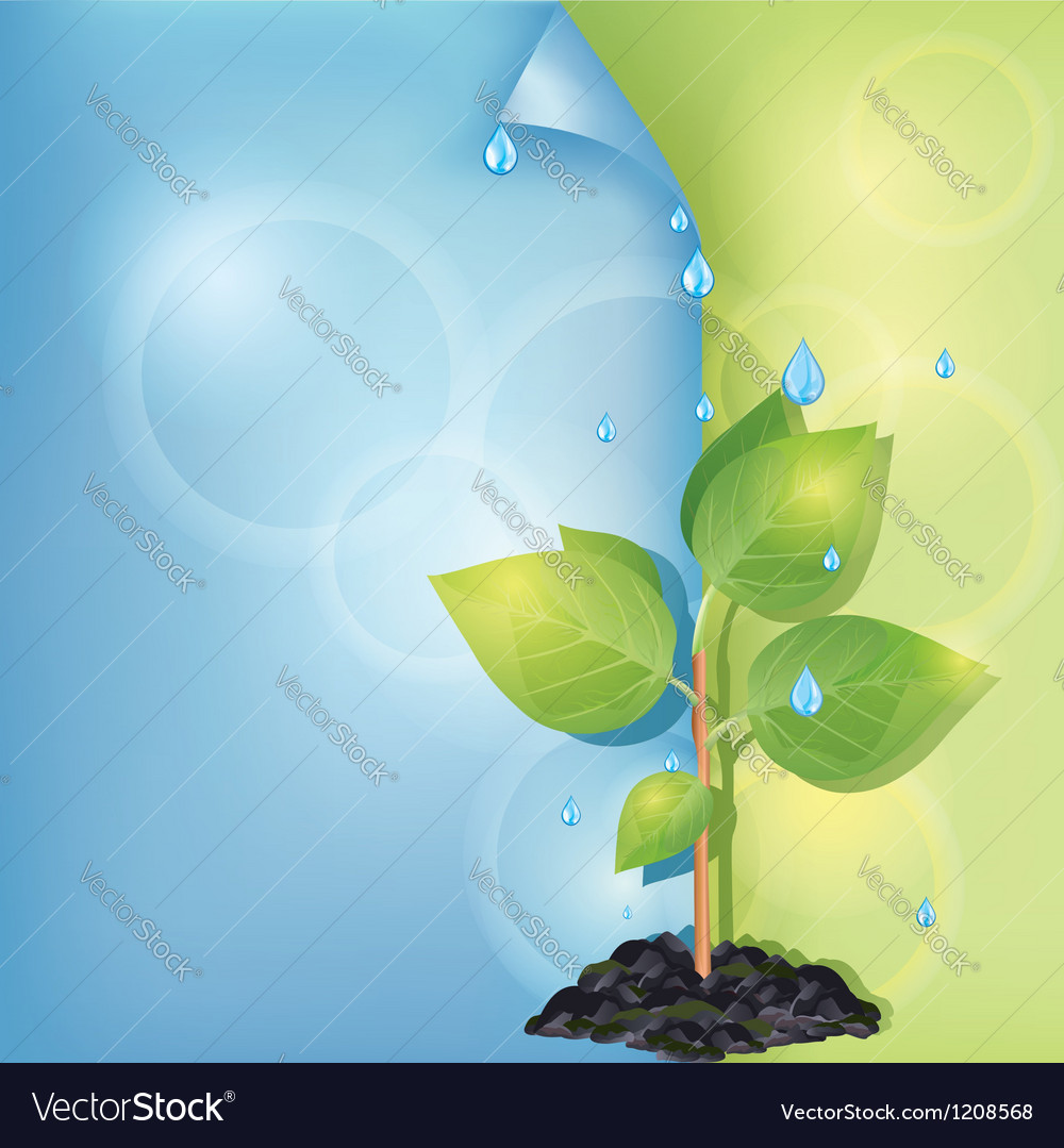 Eco background with plant and water drops vector   Price: 1 Credit (USD $1)