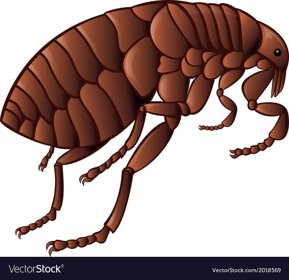 Flea vector | Price: 1 Credit (USD $1)