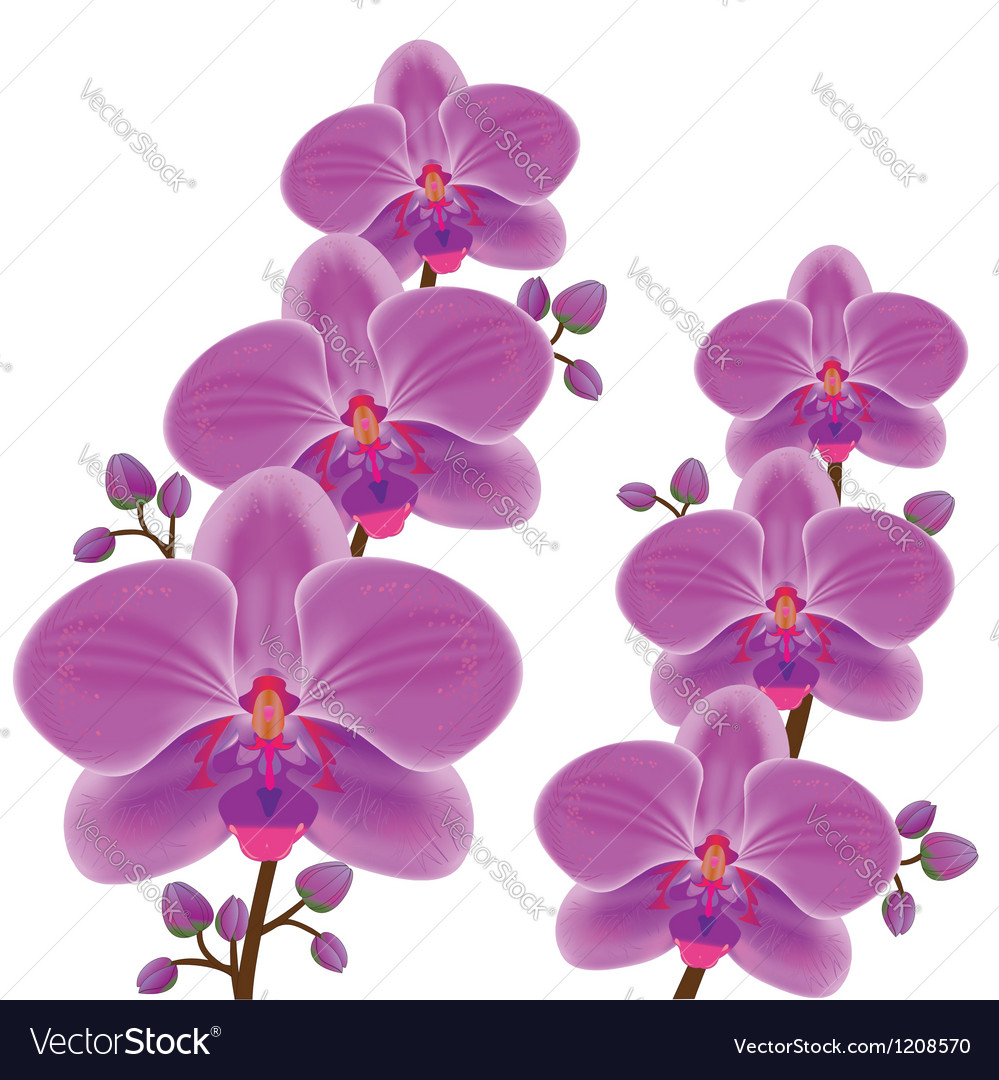 Exotic flower orchid vector | Price: 1 Credit (USD $1)