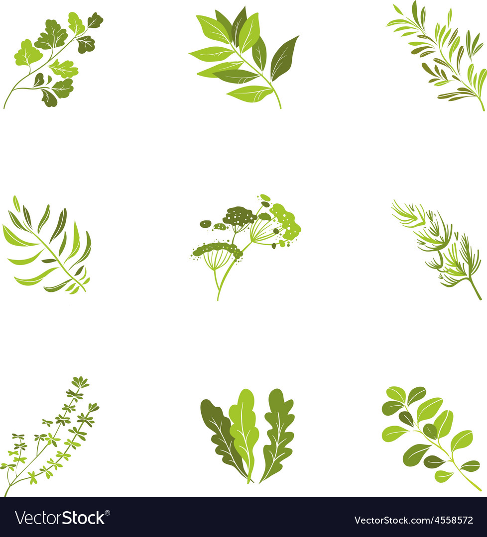 Herbs and spices icons cartoon vector | Price: 1 Credit (USD $1)
